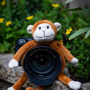 Shutter Hugger Monkey
